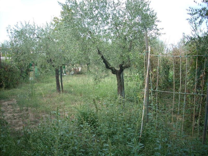 Terreno Agricolo in Vendita a Quarrata