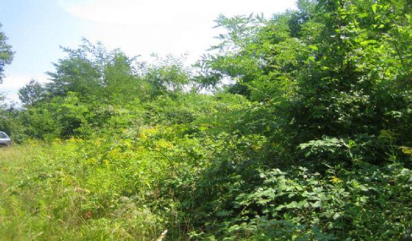 Terreno Edificabile Comm.le/Ind.le in vendita a Aramengo, 9999 locali, prezzo € 55.000 | PortaleAgenzieImmobiliari.it