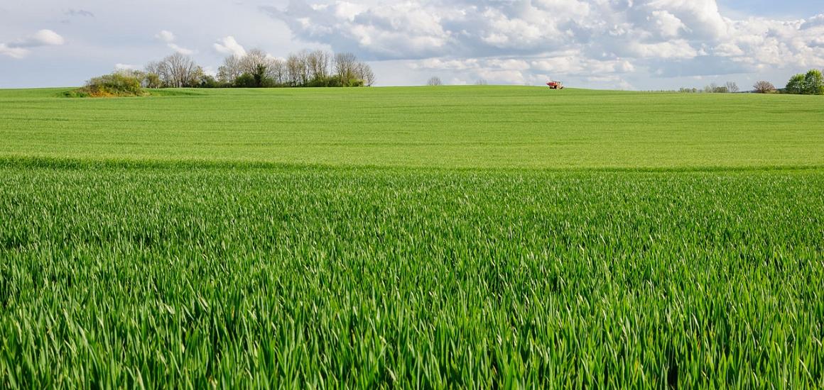 Terreno Agricolo in Vendita a Muggia