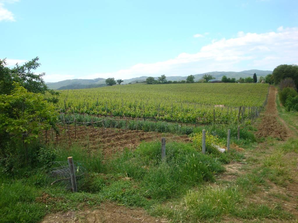 Azienda Agricola MONTALCINO 349