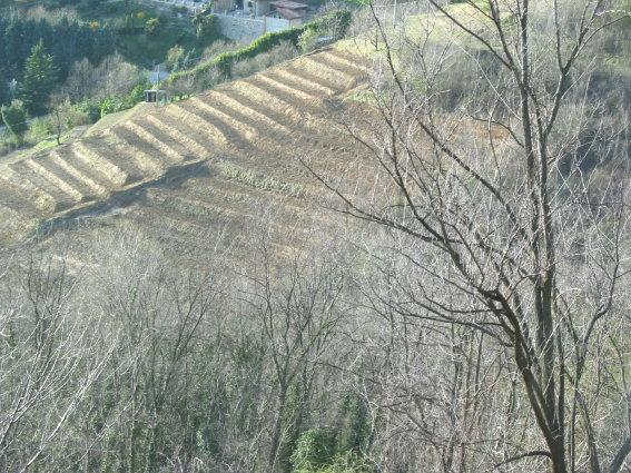 Terreno Agricolo in vendita a Bergamo, 1 locali, zona Località: (ZONA FONTANA),  | Cambiocasa.it