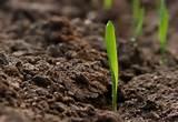 Terreno Agricolo in Vendita a Altivole