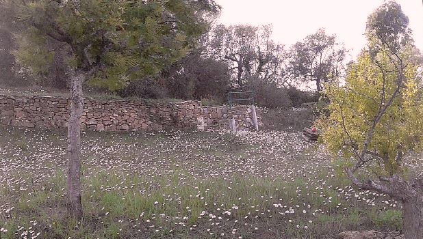 Terreno Agricolo in vendita a Diano Marina, 1 locali, prezzo € 35.000 | PortaleAgenzieImmobiliari.it