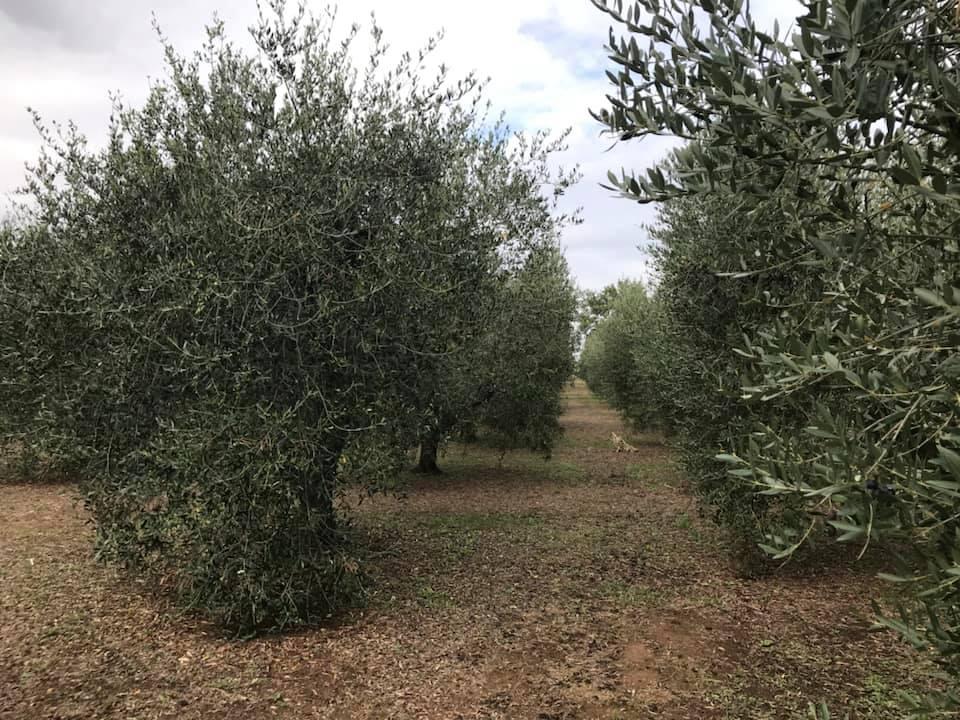 Terreno Agricolo in Vendita a Gavorrano