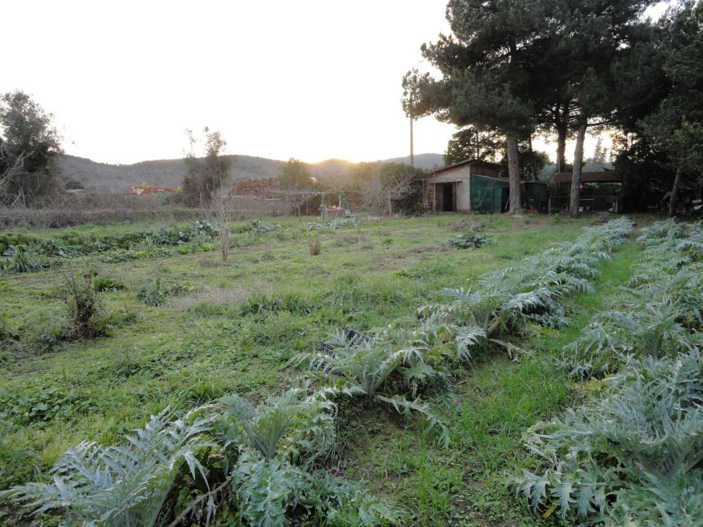 Terreno Agricolo in vendita a Piombino, 9999 locali, zona Località: GENERICA, prezzo € 70.000 | Cambio Casa.it