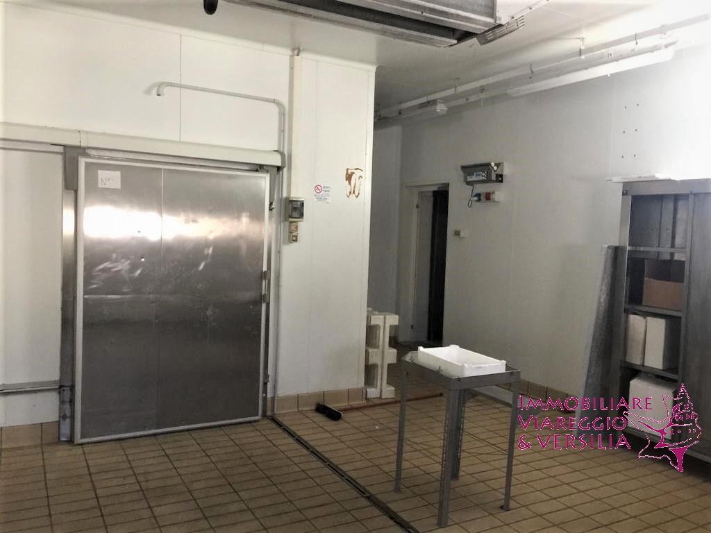 Laboratorio in Vendita a Viareggio