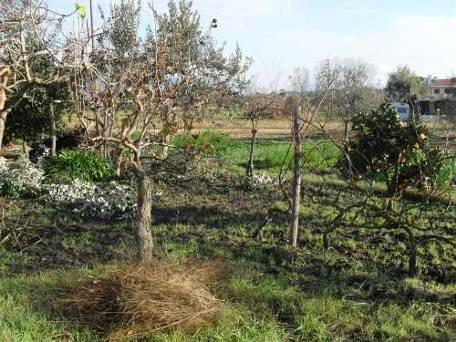 Terreno Agricolo in vendita a Fondi, 3 locali, zona Località: FONDI, prezzo € 70.000 | Cambio Casa.it
