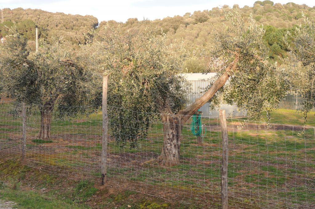 Terreno agricolo vicino a Follonica, recintato, dotato di acqua e luce con annesso agricolo non condonato da ristrutturare e serra vivaistica attrezzata con impianto di irrigazione delle dimensioni di 3.5x5 mt e  lunghezza 25 mt