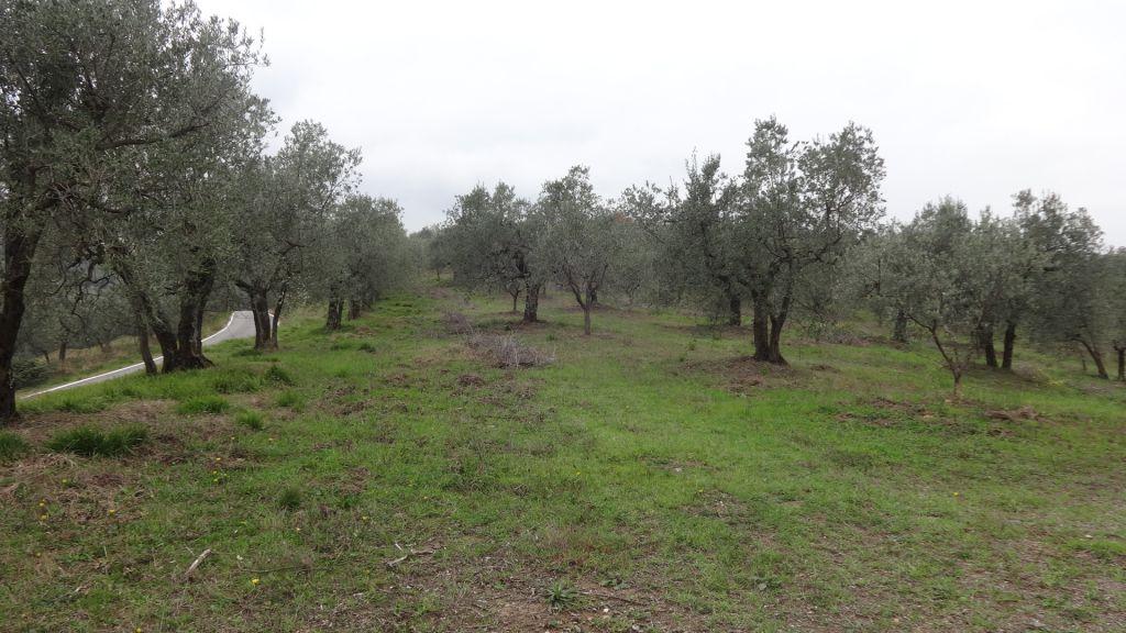 Terreno Commerciale in ottime condizioni in vendita Rif. 4769257