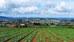 Terreno Agricolo in Vendita a Albenga