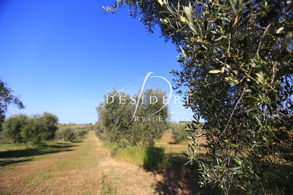 Terreno Agricolo, LOC. SAN CRESCENZO, Vendita - Magliano In Toscana (GR)