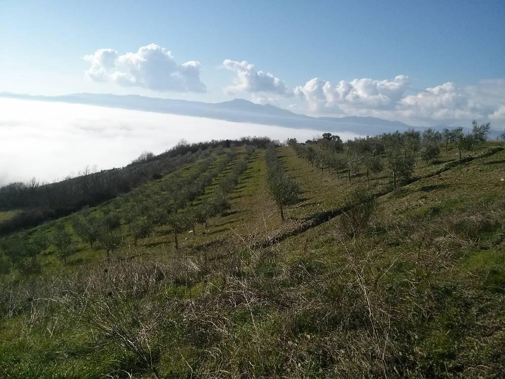 Azienda Agricola in vendita a San Casciano dei Bagni, 10 locali, zona Località: LOC. LAGO ELVELLA, prezzo € 1.000.000 | Cambio Casa.it