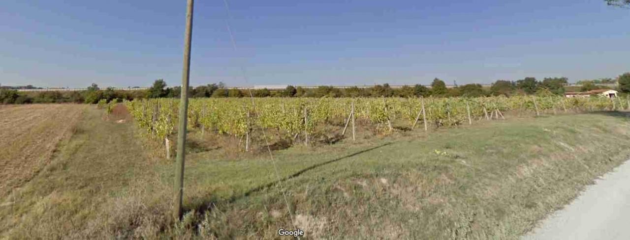 Terreno Agricolo MONTEPULCIANO TERE 1143