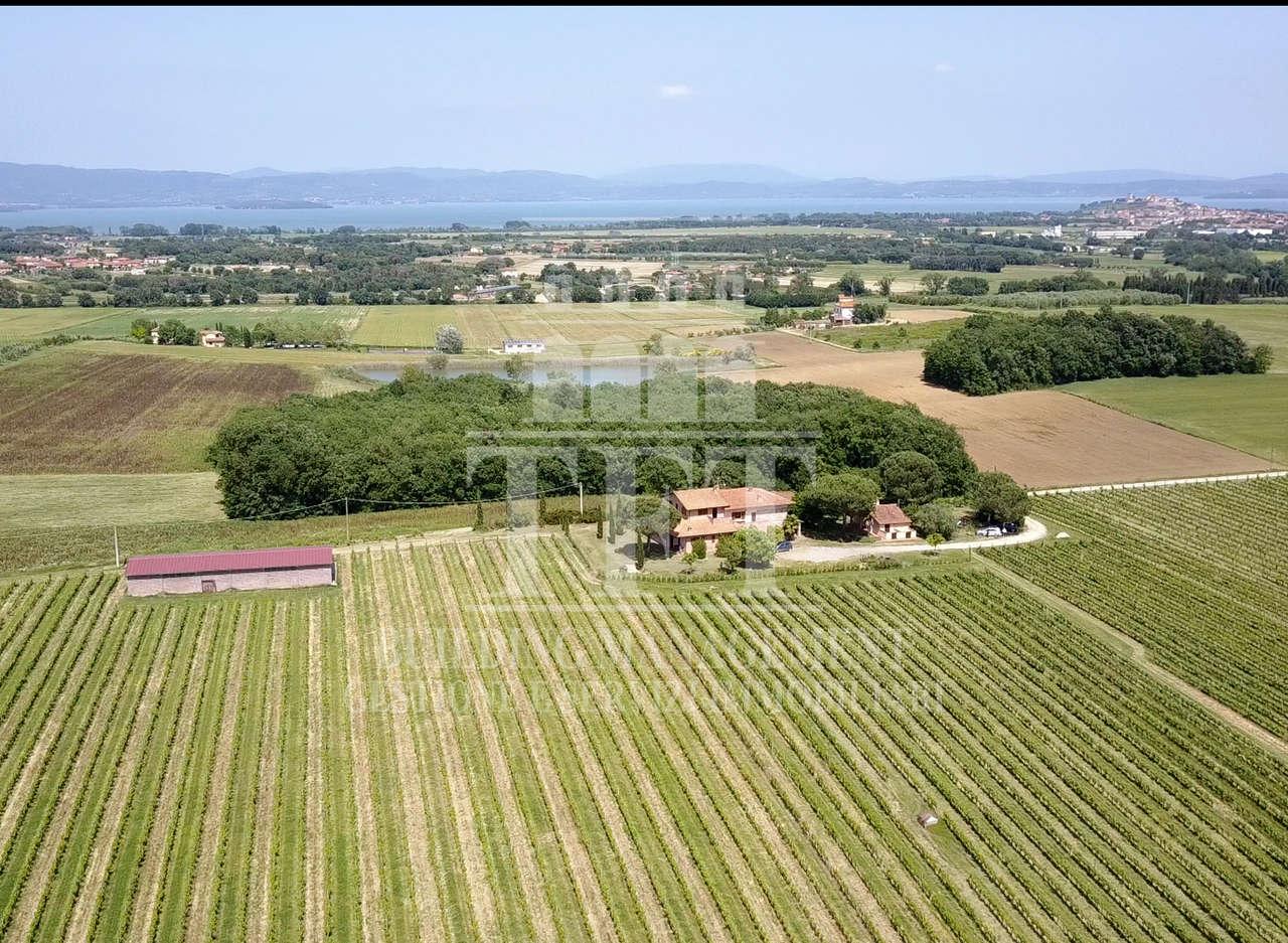 Azienda vinicola con 18 ettari di terreno di cui 13 con vigneti doc, villa suddivisa in 4 appartamenti e con ampia cantina, dependance e grande rimessa per le<br /> macchine agricole, in vendita a cinque minuti da Castiglione del Lago e dal Lago Trasimeno.