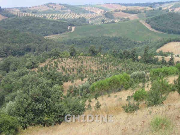 Terreno Agricolo in Vendita a Cinigiano