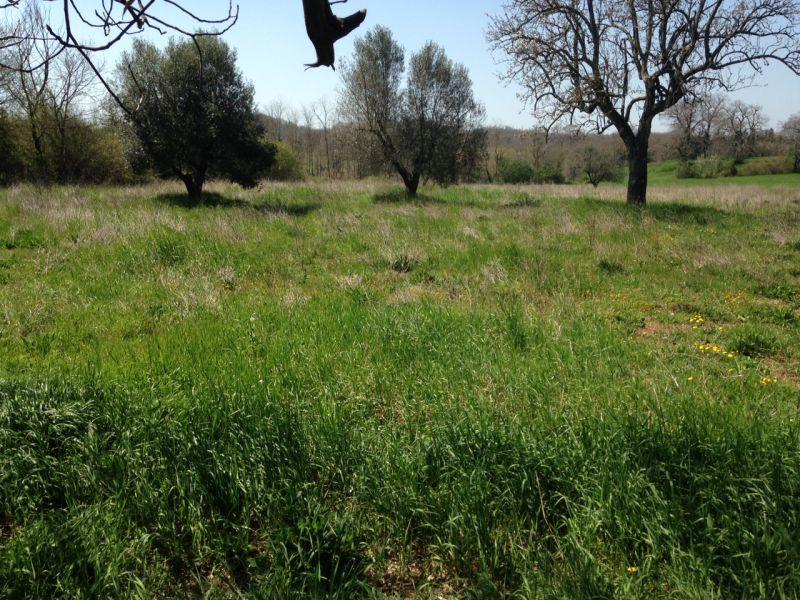 Azienda Agricola in vendita a Sorano, 9999 locali, prezzo € 40.000 | CambioCasa.it
