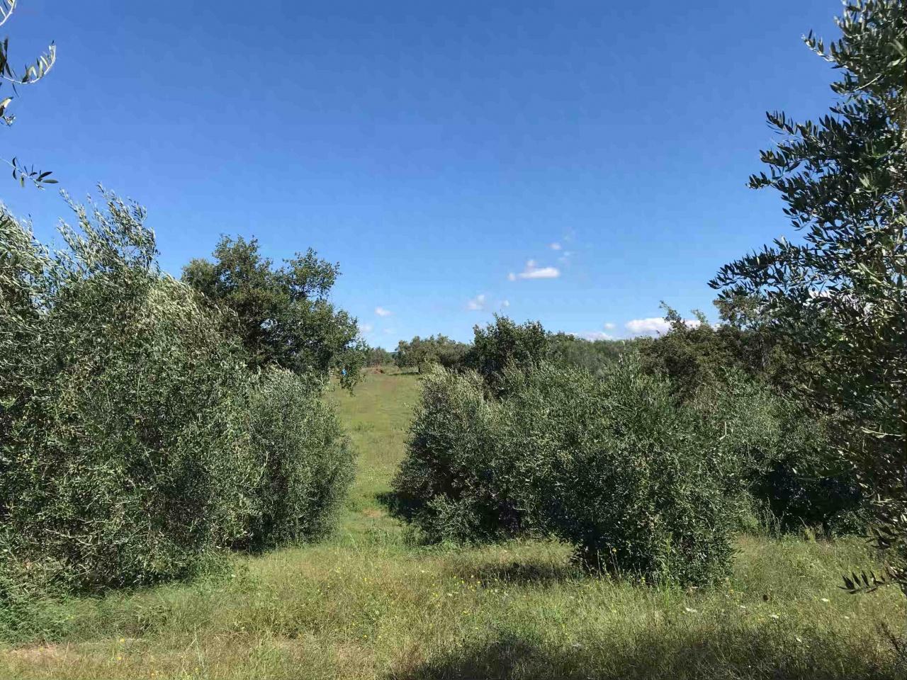Terreno Agricolo in vendita a Sorano, 9999 locali, prezzo € 50.000 | CambioCasa.it