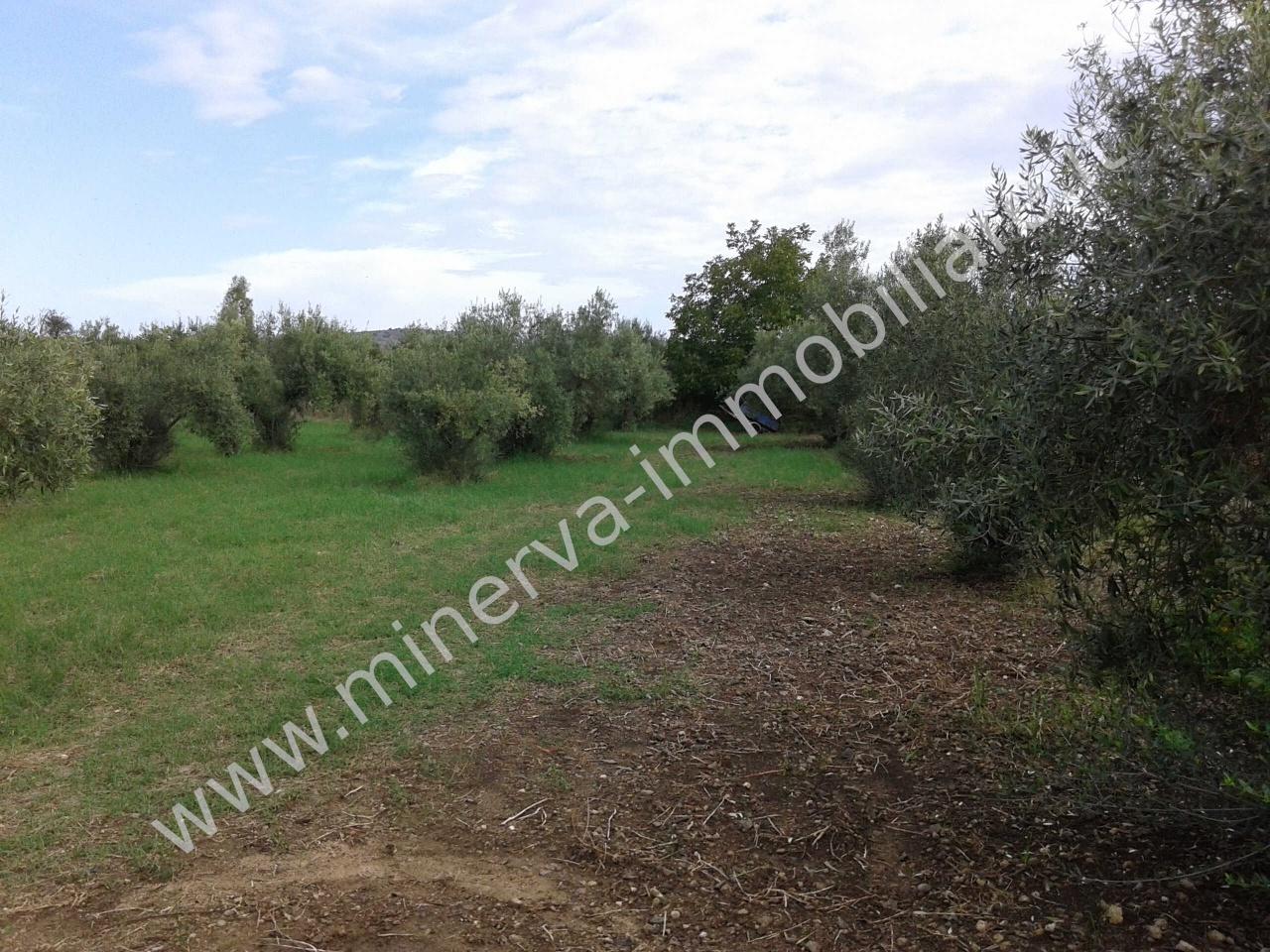 Terreno agricolo in vendita a Carlentini (SR)