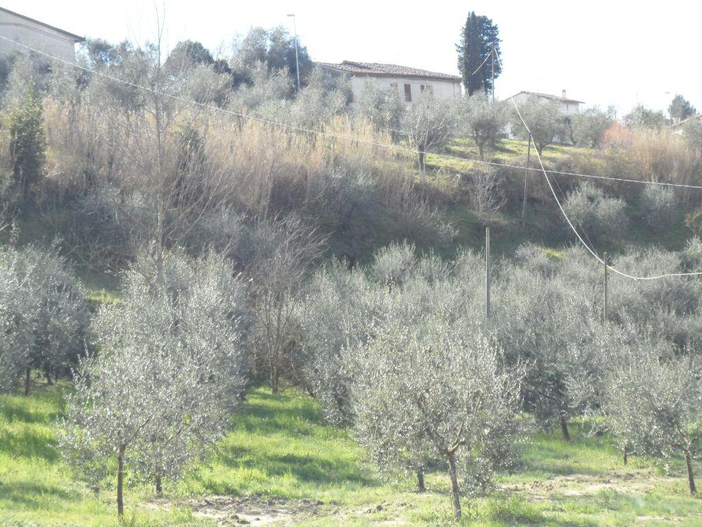 Bilocale San Miniato  6