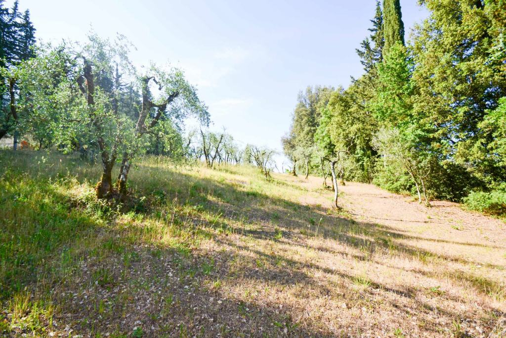 Terreno Agricolo SIENA C/934