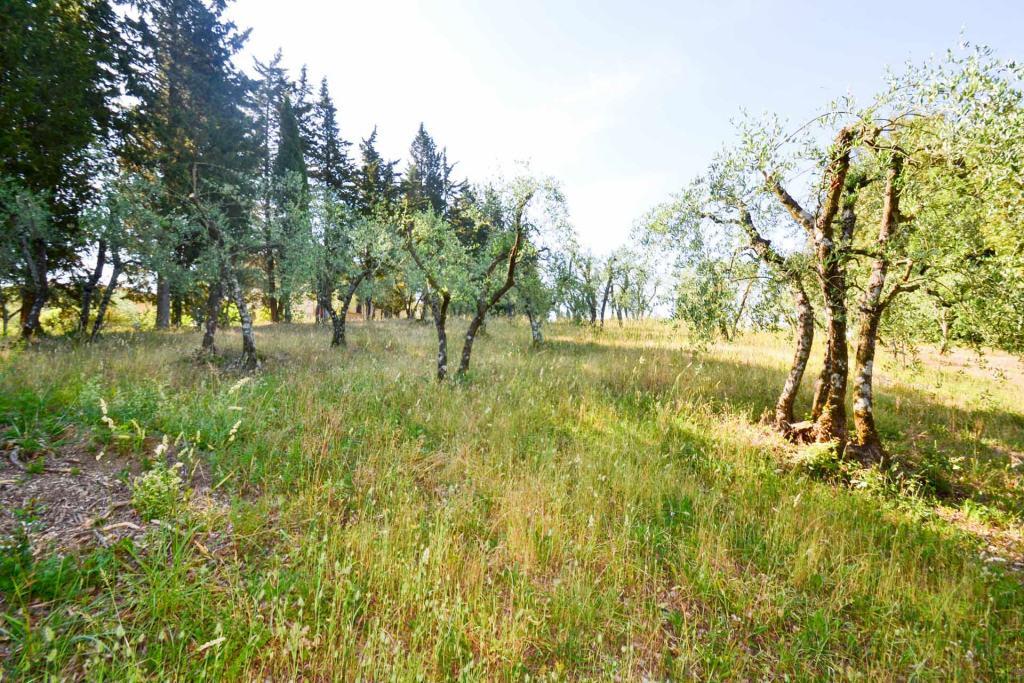 Vendita Terreno Agricolo SIENA
