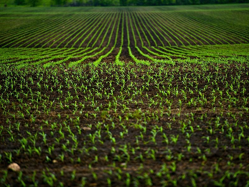 Vendita Terreno Agricolo SORGA'