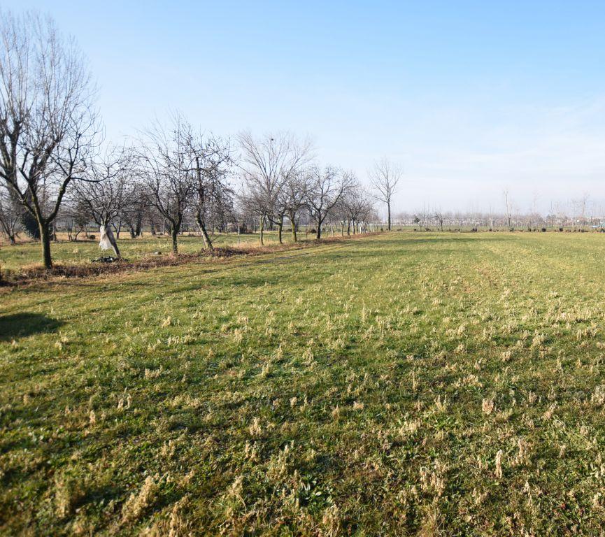 Vendita Terreno Agricolo CAERANO DI SAN MARCO
