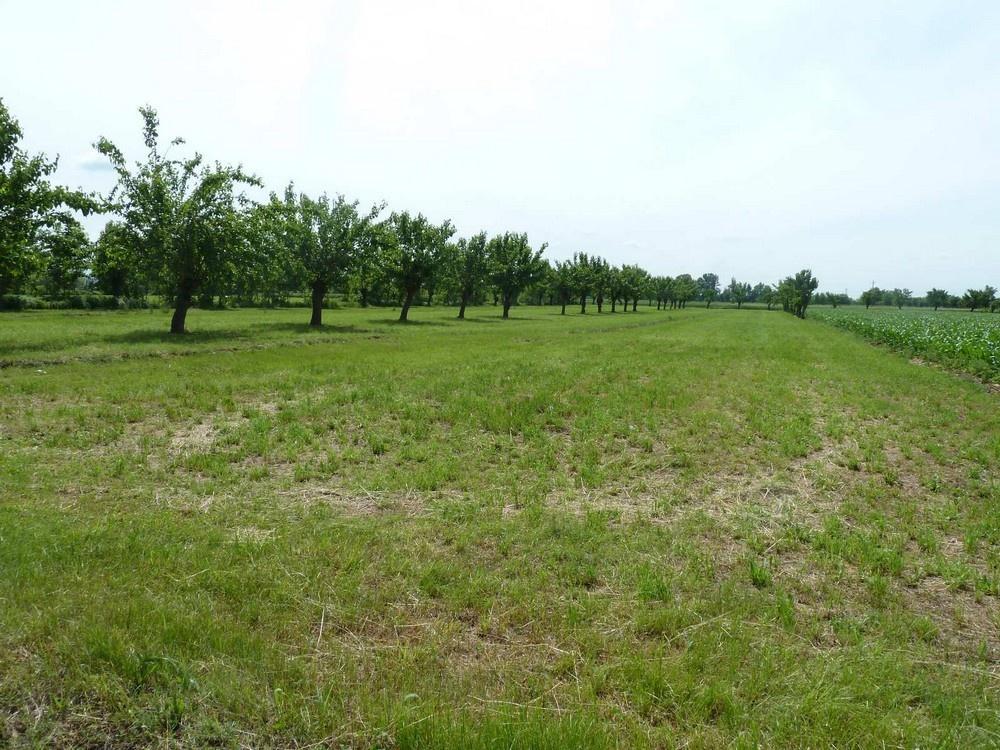Terreno Agricolo in Vendita VOLPAGO DEL MONTELLO