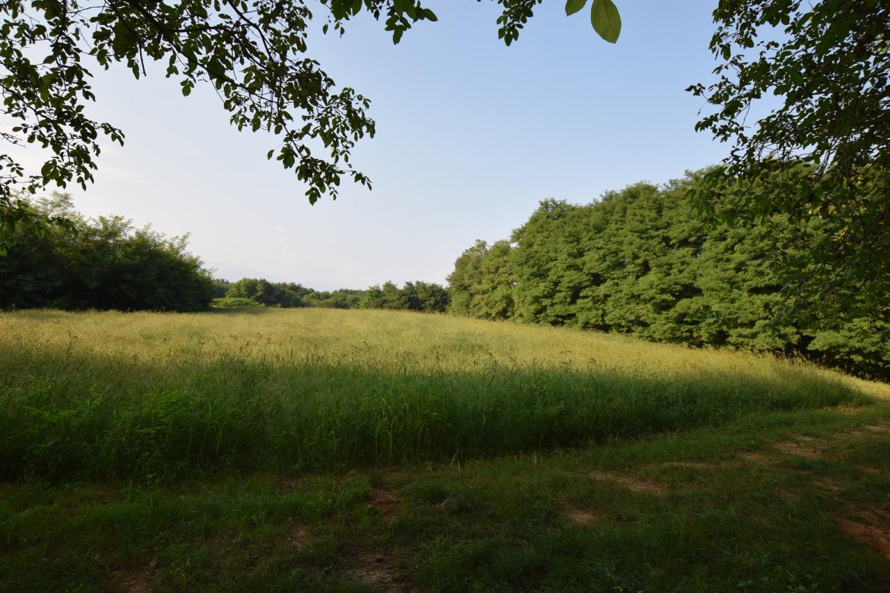 Terreno Agricolo in Vendita MONTEBELLUNA
