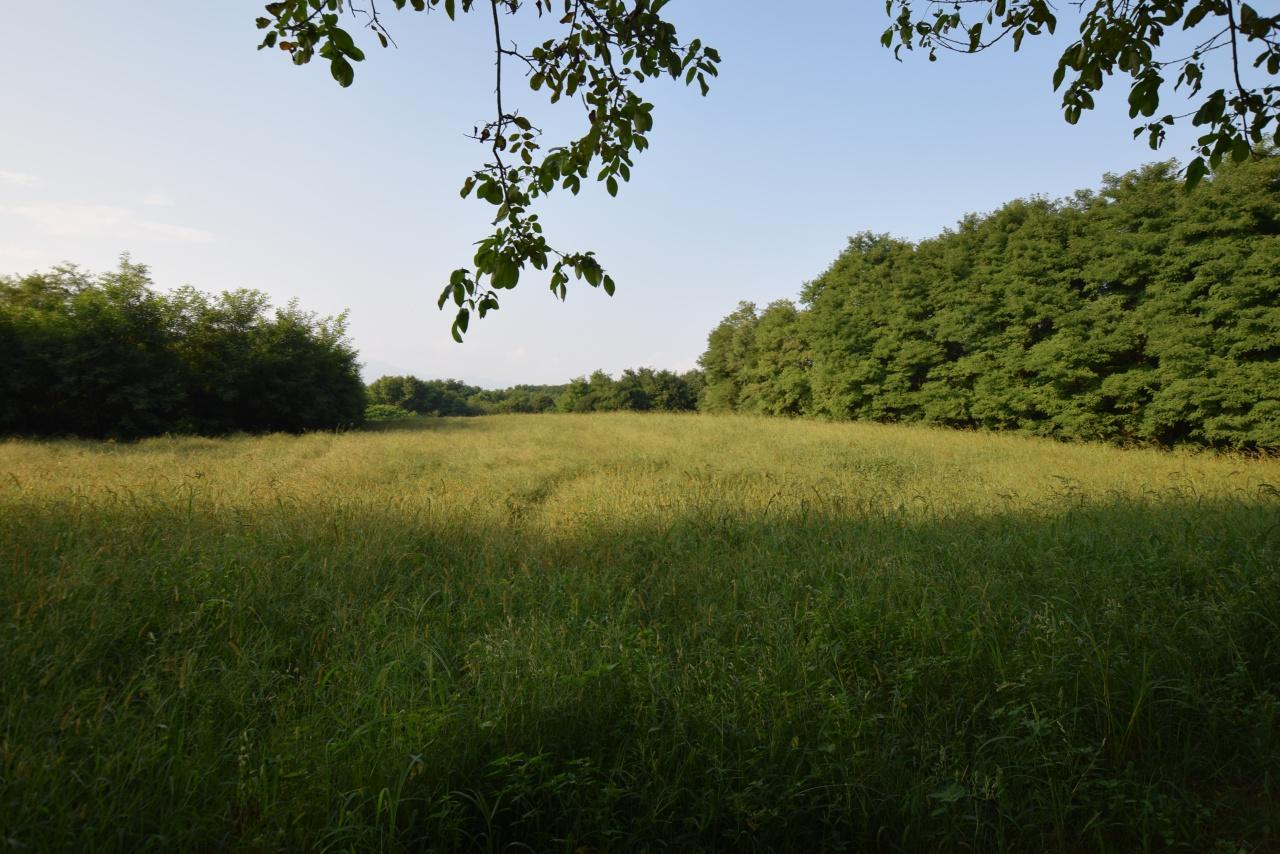 Vendita Terreno Agricolo MONTEBELLUNA