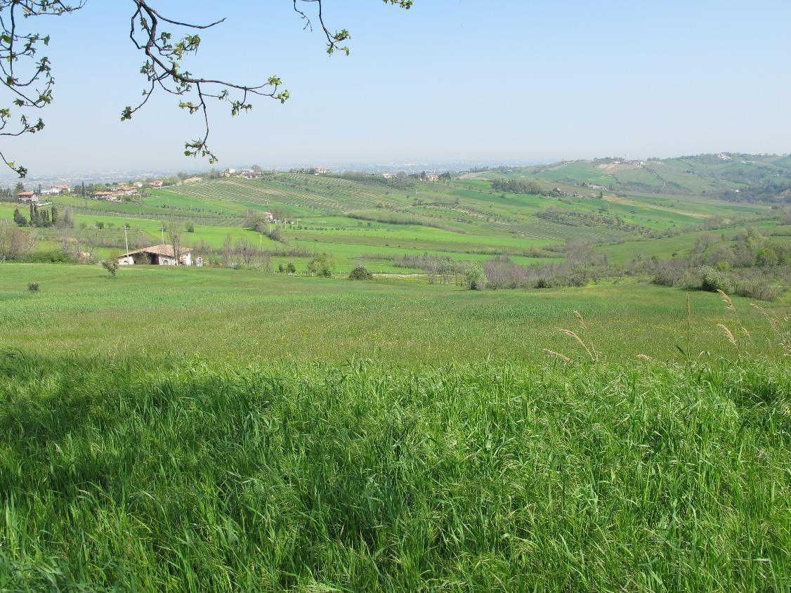 Vendita Terreno Agricolo VERUCCHIO