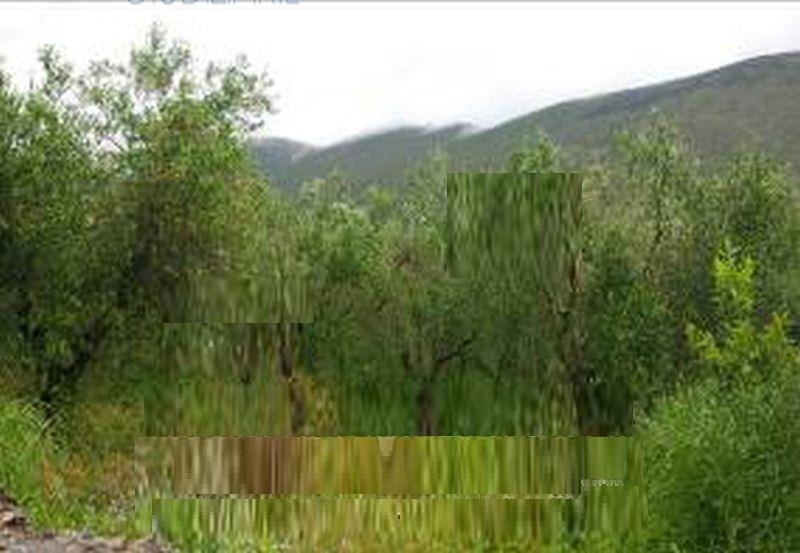 Terreno Agricolo in Vendita CAMIGLIANO