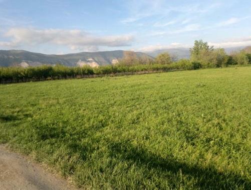 Terreno Agricolo in Vendita MARIGLIANO
