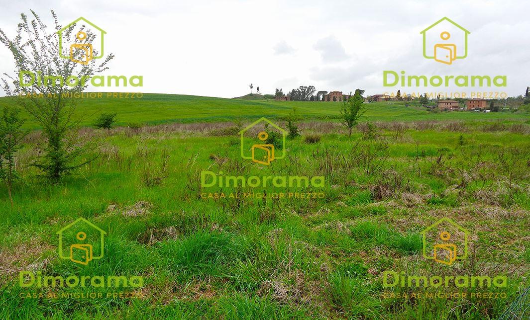 Terreno Agricolo ASCIANO SI1345969